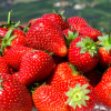 Strawberries HCG Phase 2 and HCG Phase 3 Recipe Ideas